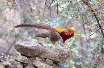 11月1日洋县拍鸟活动