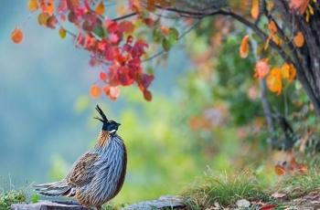 10月28日泉水湾、董寨鸟类拍摄活动