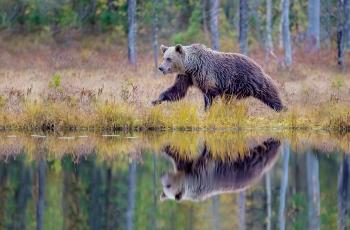 熊出没(祝贺荣获每日一图)