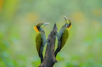 双鸟(祝贺荣获首页鸟类精华)