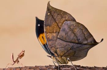 """中国·广西""""生态龙州 秘境弄岗""""微距昆虫类国际摄影大赛  【创意昆虫组】获奖作品"""