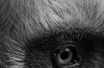 """""""白头叶猴杯""""国际自然与风光摄影大赛  【白头叶猴组】获奖作品"""