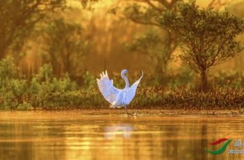 2020年1月5日斯里兰卡鸟类拍摄活动