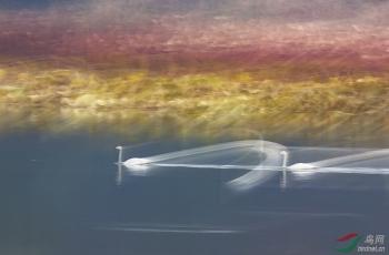 天鹅湖的秋色