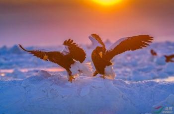 雪上双雕(祝贺荣获首页鸟类精华)