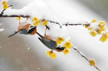 聊聊《大雪》节气