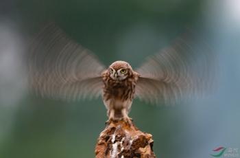梦幻的翅膀