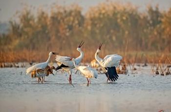 藕塘欢唱—白鹤
