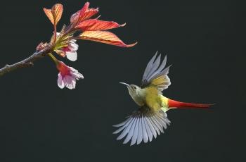 """第二届""""高黎贡山杯""""国际观鸟摄影 对抗赛获奖作品"""