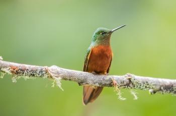 2020年6月10日厄瓜多尔拍鸟活动12天