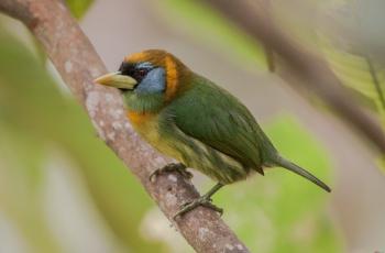 2020年7月6日哥伦比亚鸟类拍摄活动