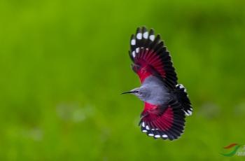 飞来一只红蝴蝶 ------贺荣获首页精华