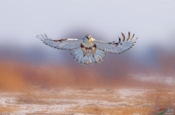 拜年啦:愿您在新的一年羽翼饱满、一飞冲天!