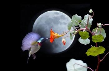 月光下的精灵