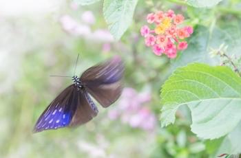 蝶舞迎春——期待春暖花开时