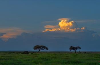 肯尼亚安愽塞利国家保护区