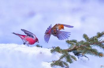 冬天的小鸟