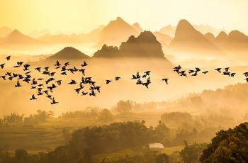 宾客飞过群山里---祝贺佳作荣获每日一图