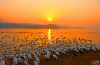 保护野生动物,鸟网大有可为!