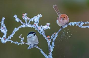 冬天的守望---祝贺佳作获每日一图