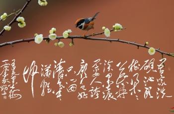 《诗咏志,鸟叹梅》