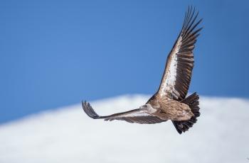 自由翱翔---( 荣获每日一图 )