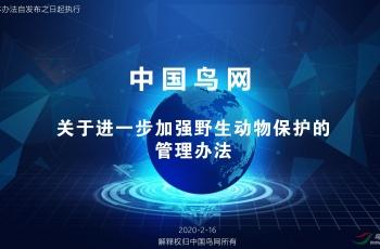 中國鳥網關于進一步加強野生動物保護的管理辦法