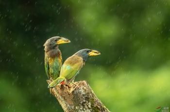 风雨与共-------(恭贺荣获首页鸟类精华)