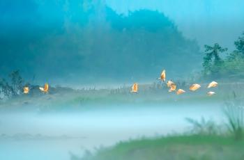 雾如轻纱  鸟如仙子