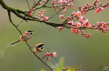 《战胜疫情,呼唤春天》
