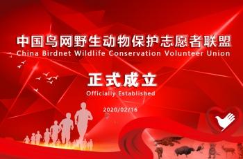 中國鳥網野生動物保護志愿者聯盟成立