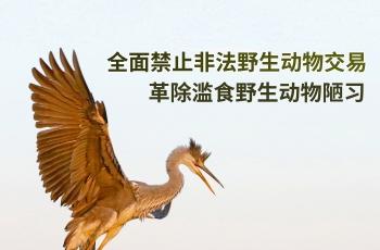 禁止非法野生动物交易  革除滥食野生动物陋习