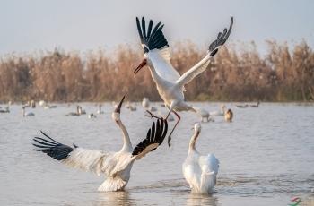 《摄鸟人的拍摄利器》