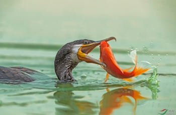 拎条红鱼来加油