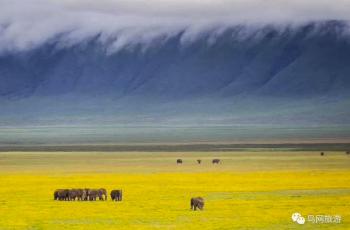 【重要通知】坦桑尼亚猎豹摄影团疫情补贴政策