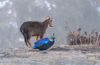 野生动物保护—但愿悲剧不再重演!
