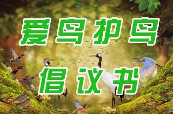 爱鸟护鸟倡议书