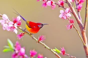 春天的太陽(賀獲鳥類精華)