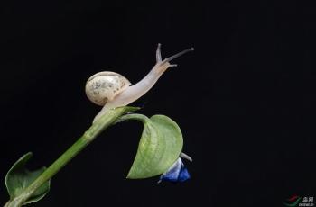 蜗牛【贺获首页精华】