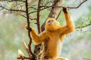 诱迫野生动物表演盈利—违法—必须禁止!