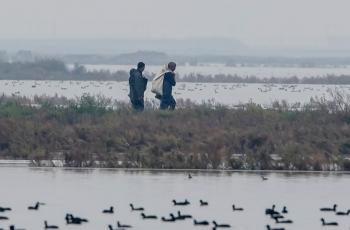 拍鸟护鸟是我们的责任