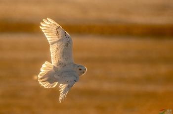 保护野生动物  从拒拍育雏期鸟类做起
