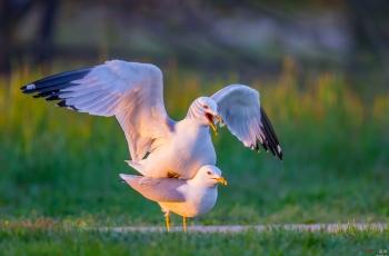 【啥情况?】恭贺老师佳作获鸟网首页鸟类精华