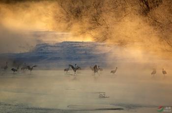 那晨--那雾--那鹤——美好的记忆