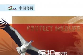 """关于对积极参加""""野生动物保护宣传海报活动""""投稿者积分奖励的通知"""
