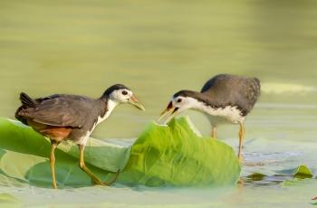 议一下《广东省野生动物保护管理条例》