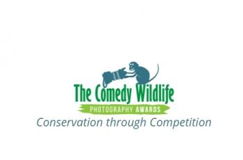 趣味野生动物国际摄影大赛