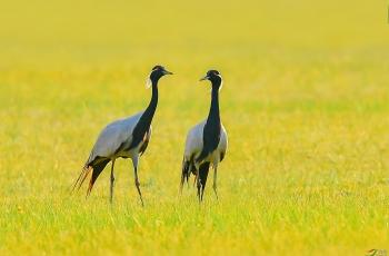 增强法治意识  保护野生动物