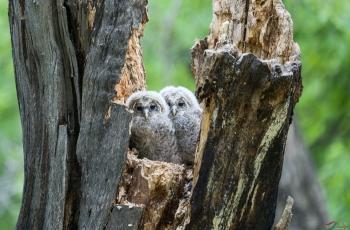 中国鸟网野生动物保护志愿者救助的故事