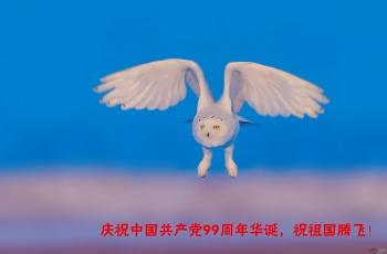 庆祝中国共产党成立99周年华诞!(祝贺荣获首页图文精华)